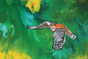 """Kestral"" by Margo Holst"